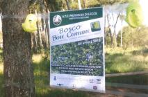 sogliano-bosco-004.jpg
