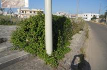 muro-leccese-009.jpg