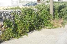 muro-leccese-021.jpg
