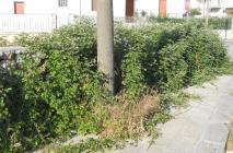 muro-leccese-023.jpg