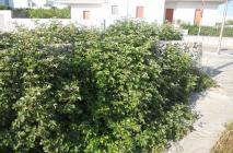 muro-leccese-025.jpg