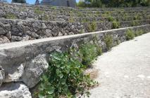 muro-leccese-011.jpg