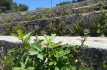 muro-leccese-028.jpg